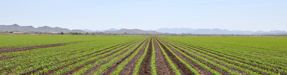 field in Goodyear Arizona